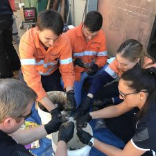 Queensland Offices Get Their Hands Dirty in Asbestos Training